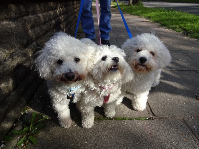 Gorgeous Charlie, Lucy and Jack!