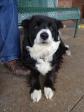 Cute Maisie!