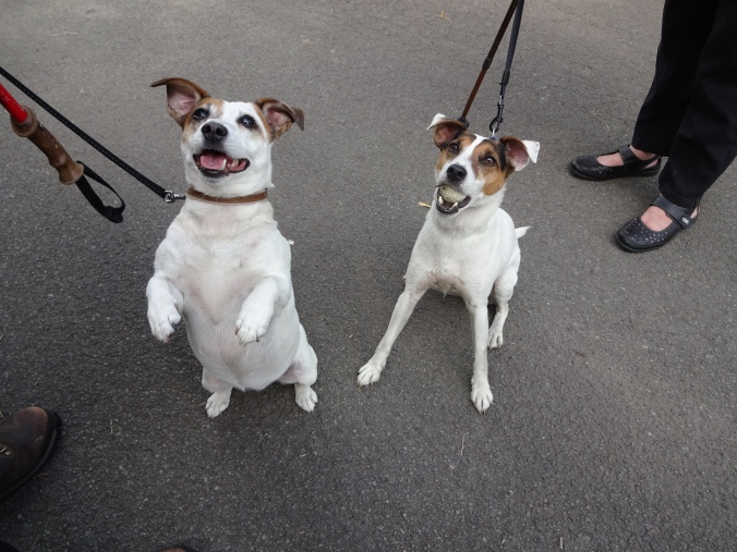 Gorgeous Ozzy and Sally!