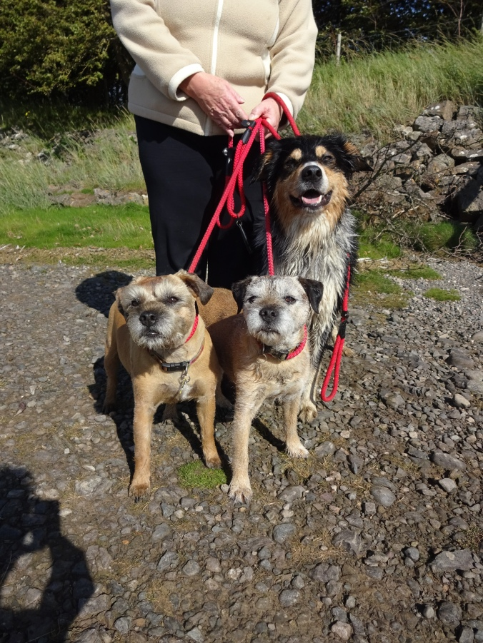 Handsome Alf, Fred and Buddy!