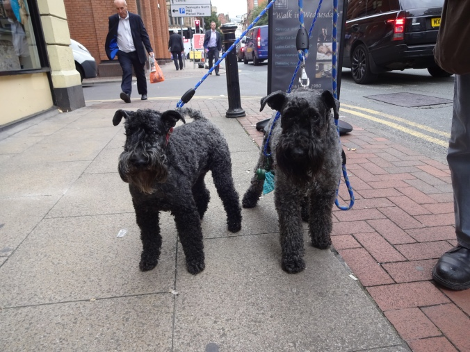 Beautiful Coco and Handsome Charlie!