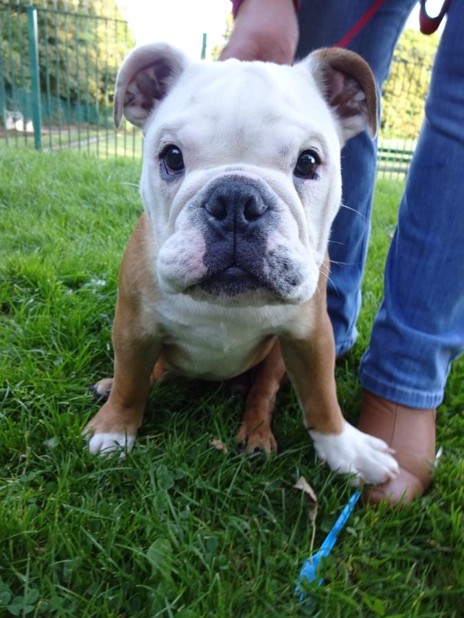 Gorgeous Winston!