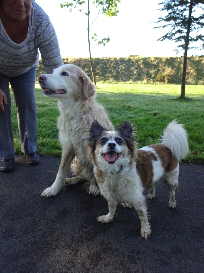 Gorgeous Amber and Scamp!