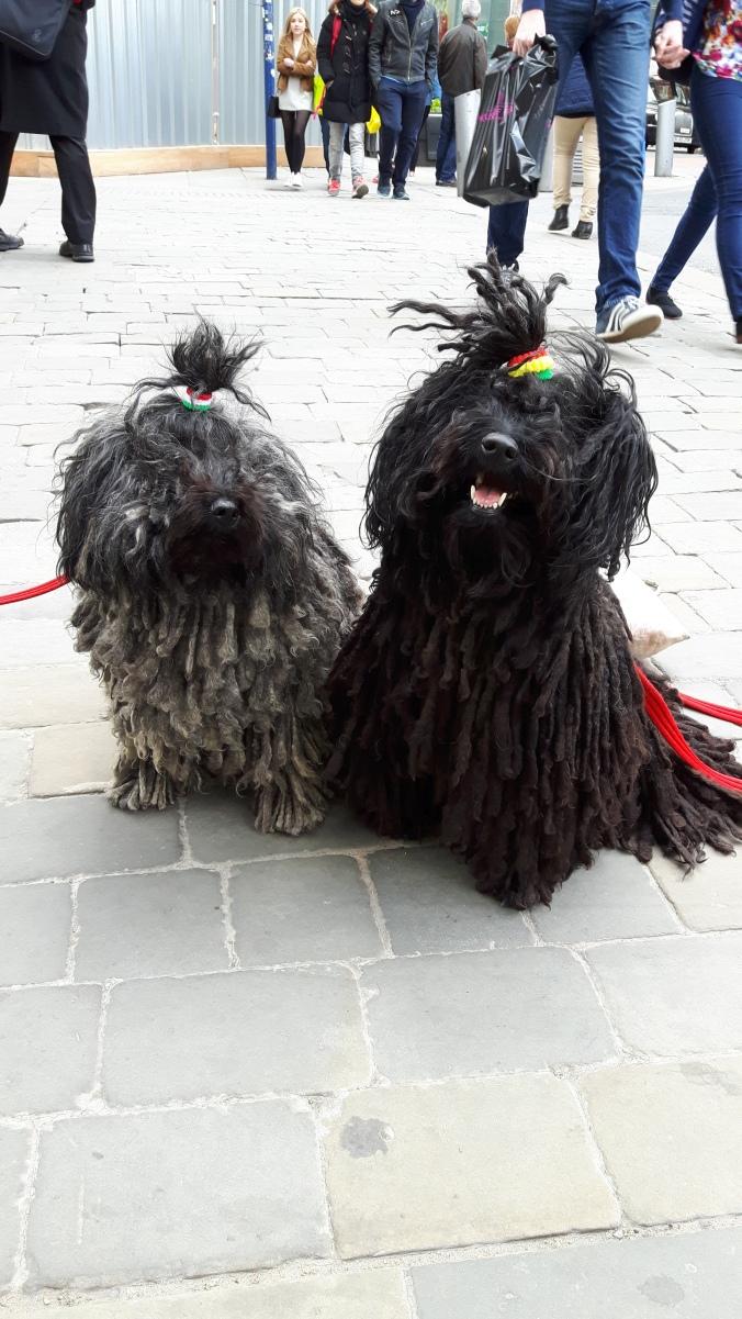 Zebbi & Kimba 2